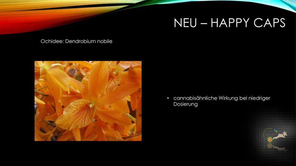 NEU – Happy caps Ochidee: Dendrobium nobile