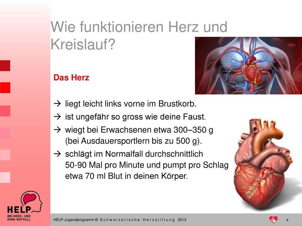 Wie funktionieren Herz und Kreislauf