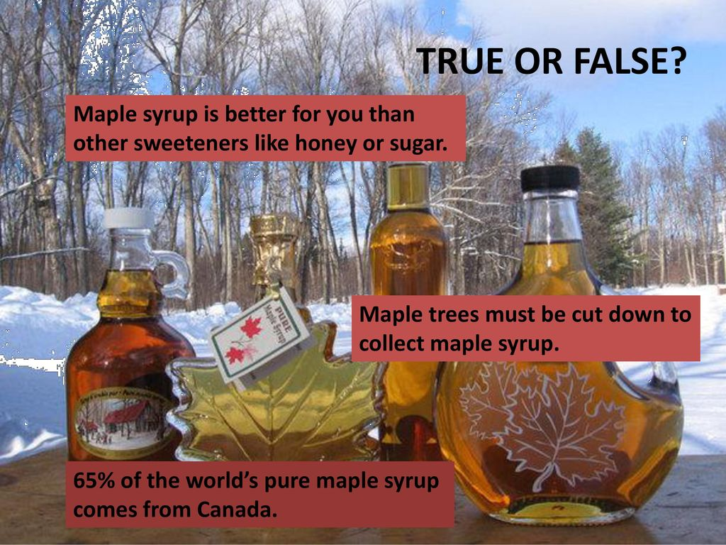 TRUE OR FALSE Maple syrup is better for you than other sweeteners like honey or sugar. Maple trees must be cut down to collect maple syrup.