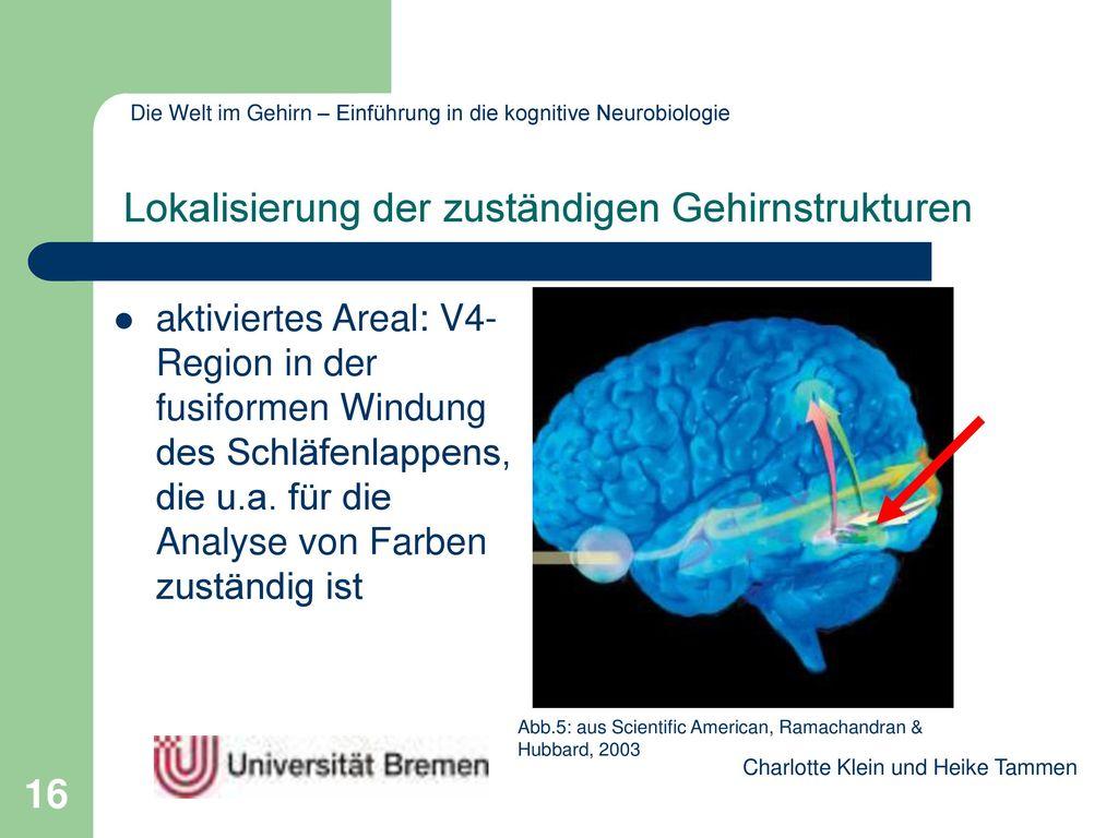 Lokalisierung der zuständigen Gehirnstrukturen