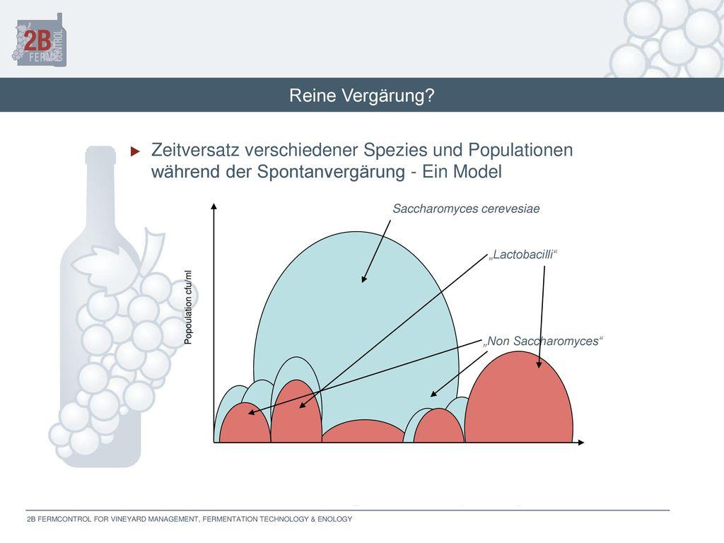 Reine Vergärung Zeitversatz verschiedener Spezies und Populationen während der Spontanvergärung - Ein Model.