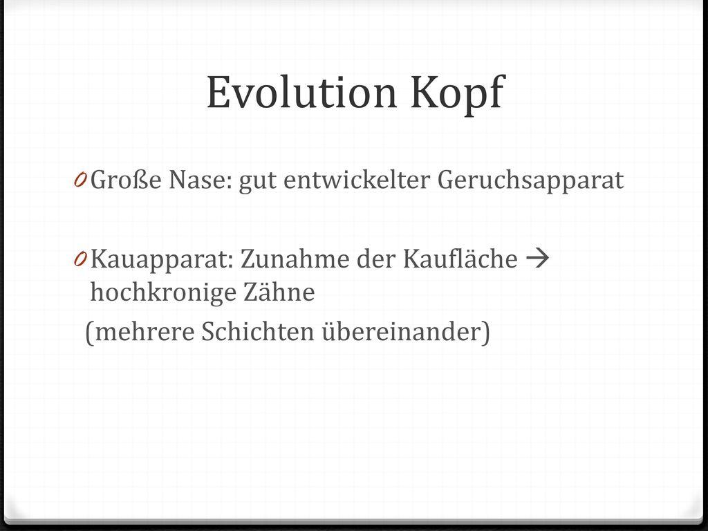 Evolution Kopf Große Nase: gut entwickelter Geruchsapparat