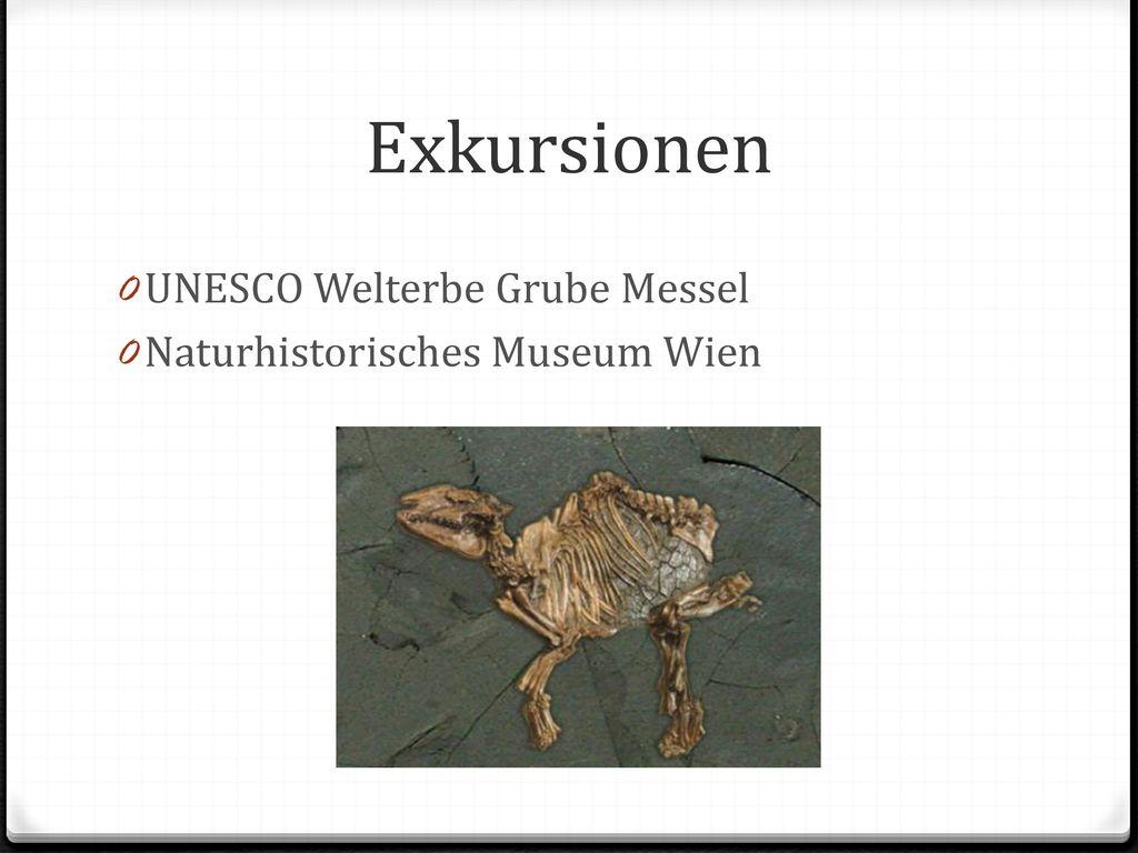 Exkursionen UNESCO Welterbe Grube Messel Naturhistorisches Museum Wien