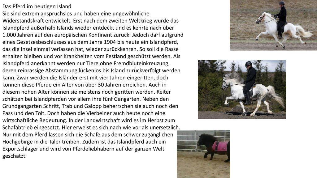 Das Pferd im heutigen Island