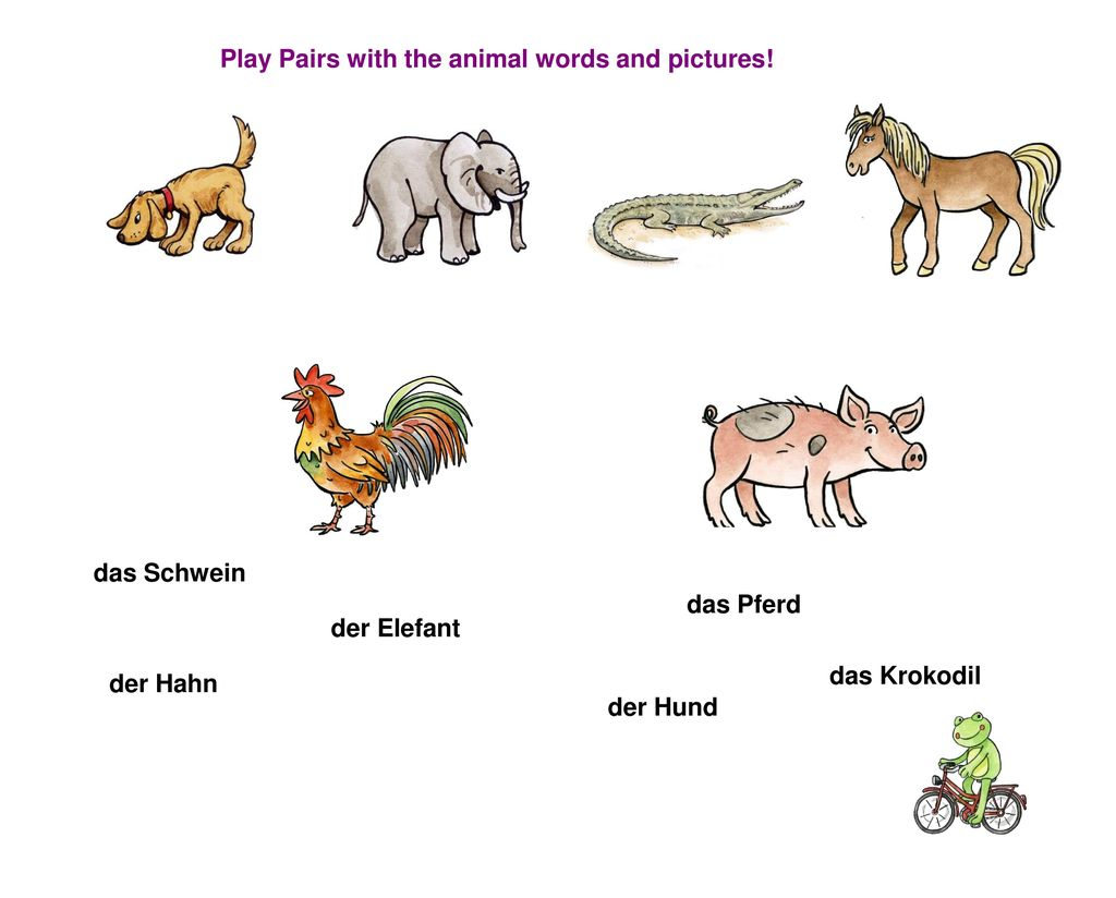 Play Pairs with the animal words and pictures!