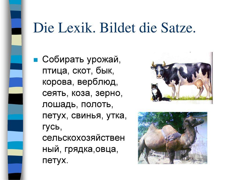Die Lexik. Bildet die Satze.