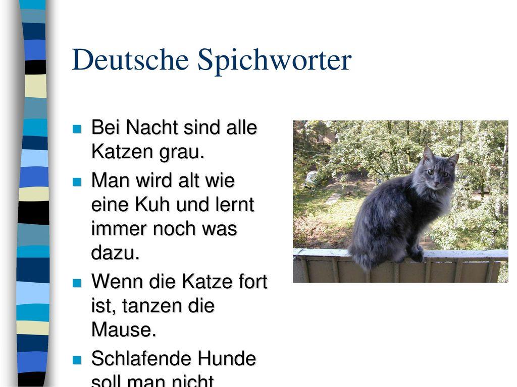Deutsche Spichworter Bei Nacht sind alle Katzen grau.