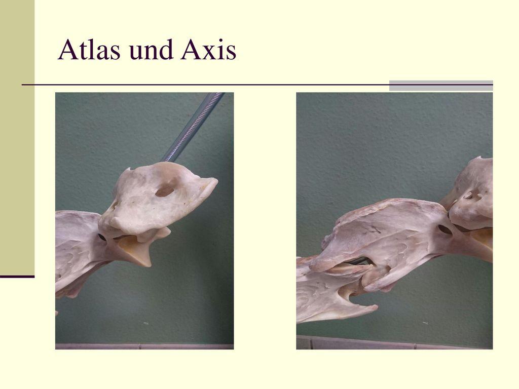 Atlas und Axis