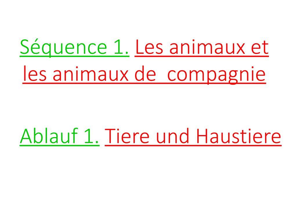 Séquence 1. Les animaux et les animaux de compagnie