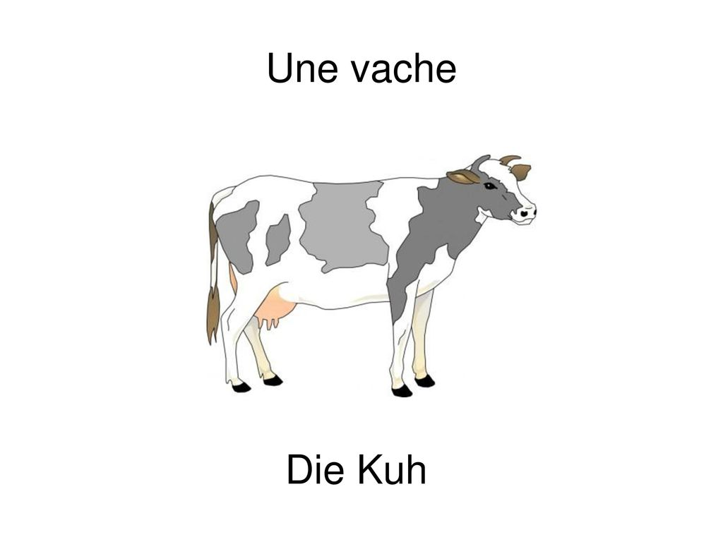 Une vache Die Kuh