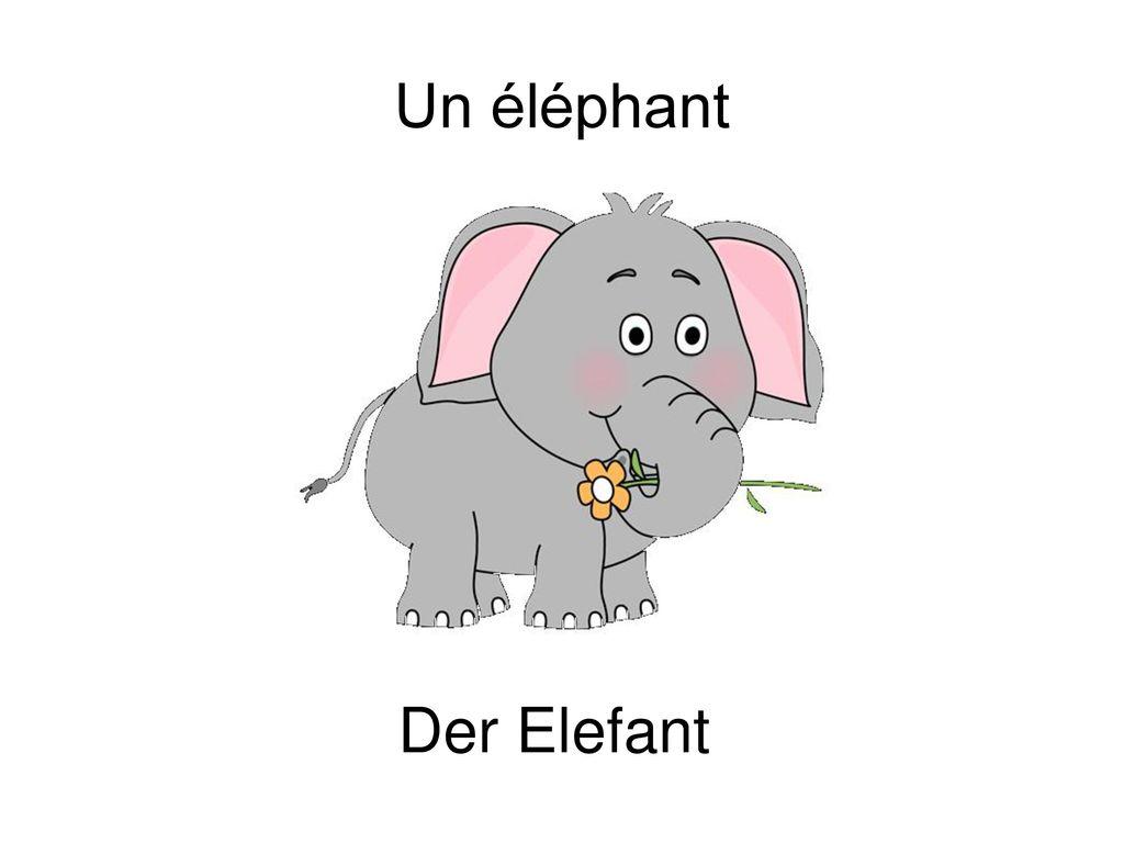 Un éléphant Der Elefant