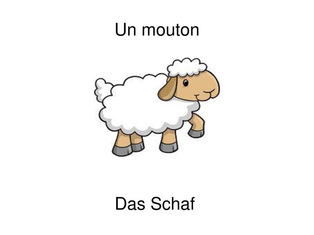 Un mouton Das Schaf