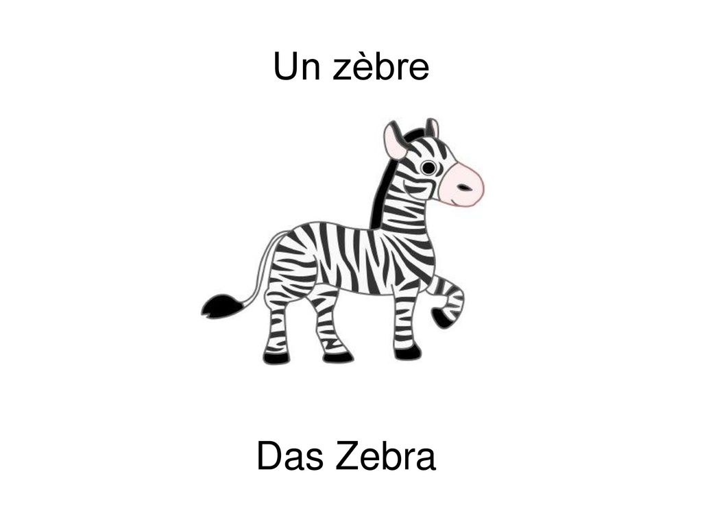 Un zèbre Das Zebra