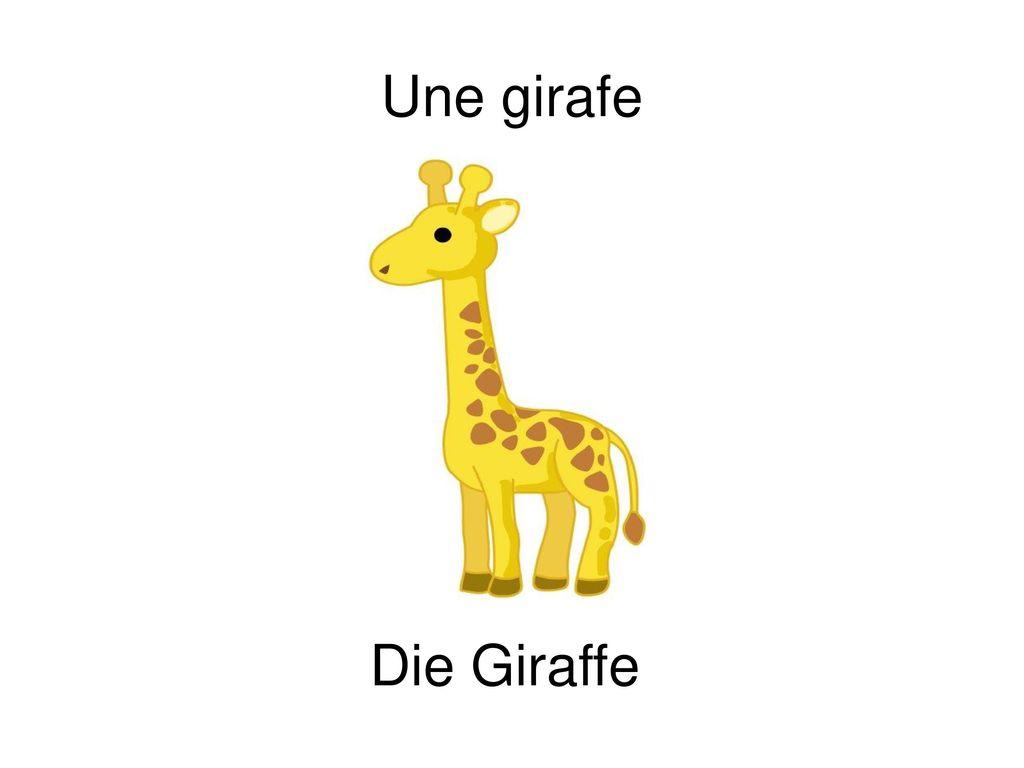 Une girafe Die Giraffe