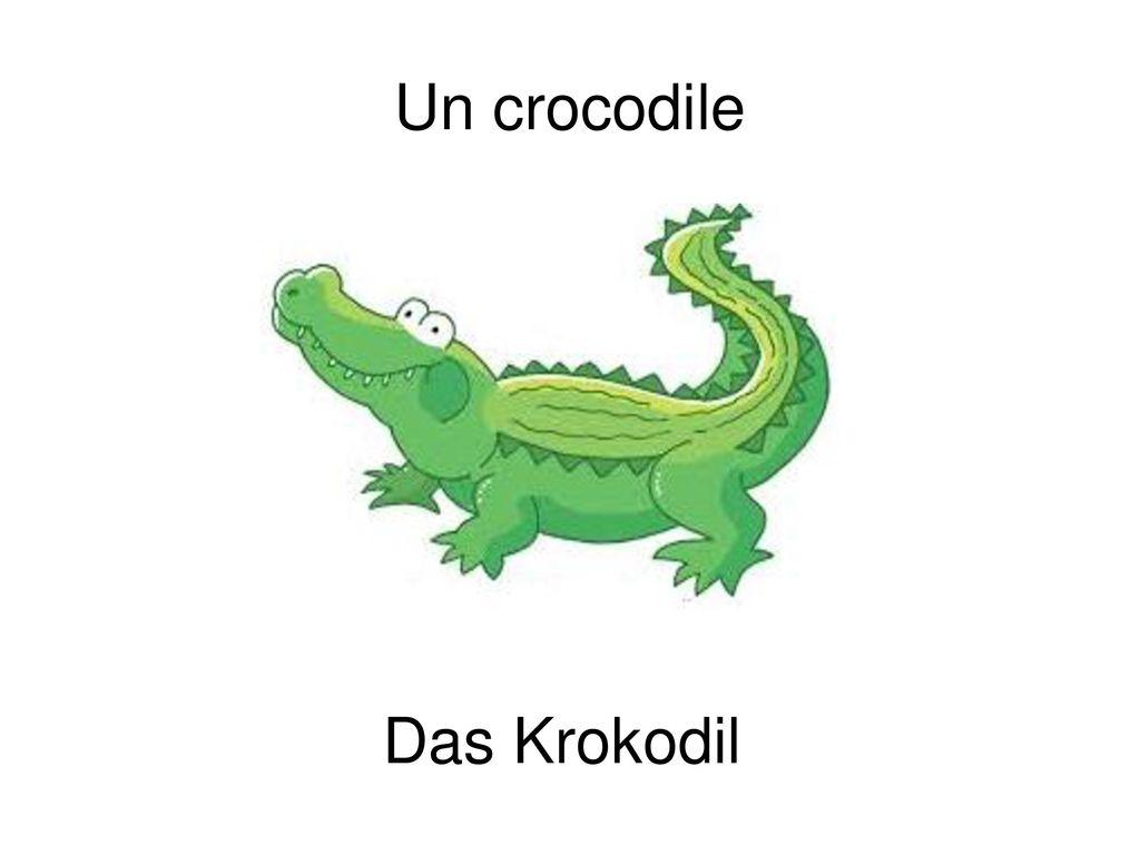 Un crocodile Das Krokodil