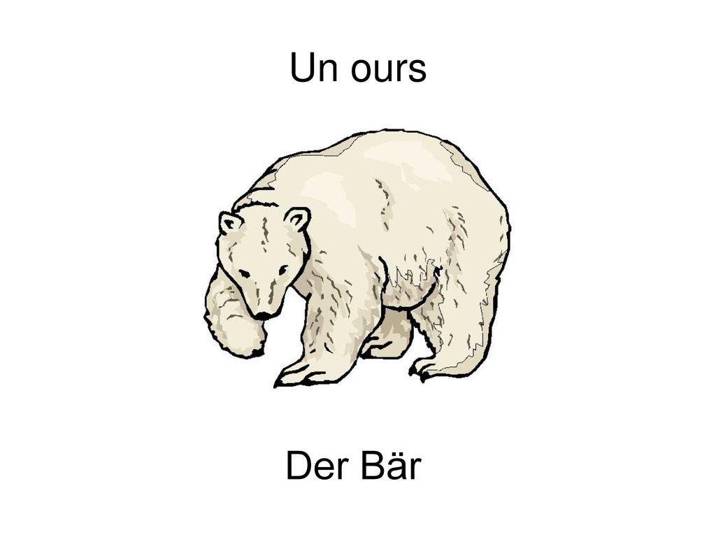 Un ours Der Bär