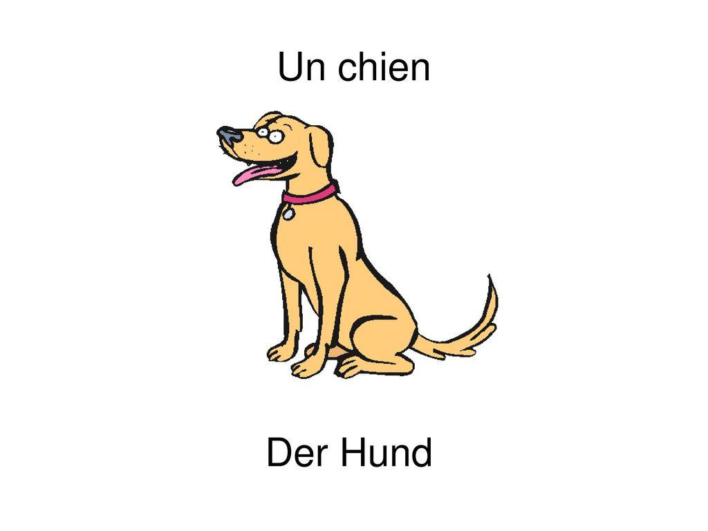 Un chien Der Hund
