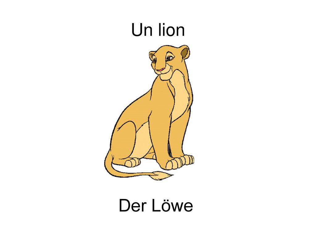 Un lion Der Löwe