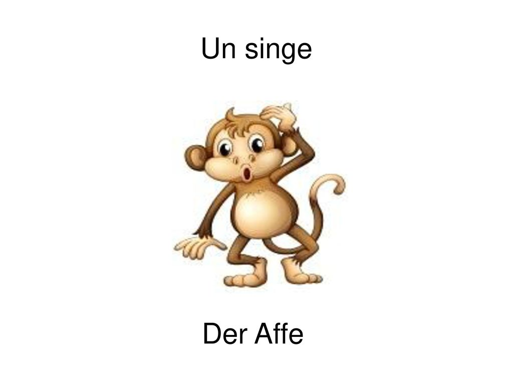 Un singe Der Affe