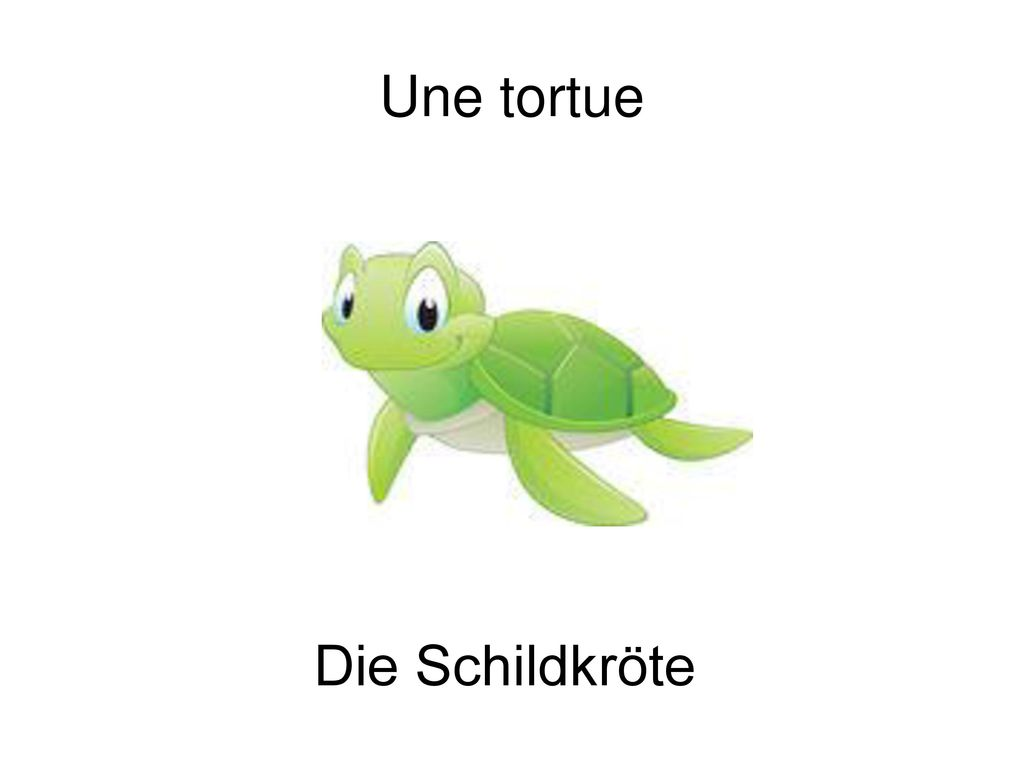 Une tortue Die Schildkröte