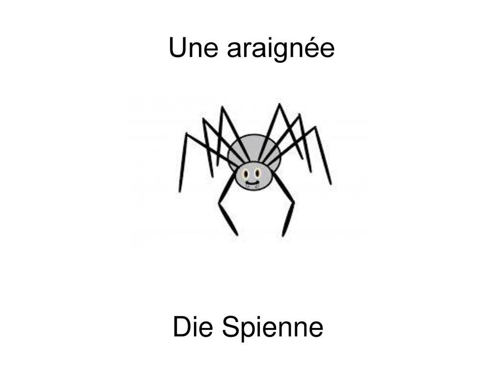 Une araignée Die Spienne