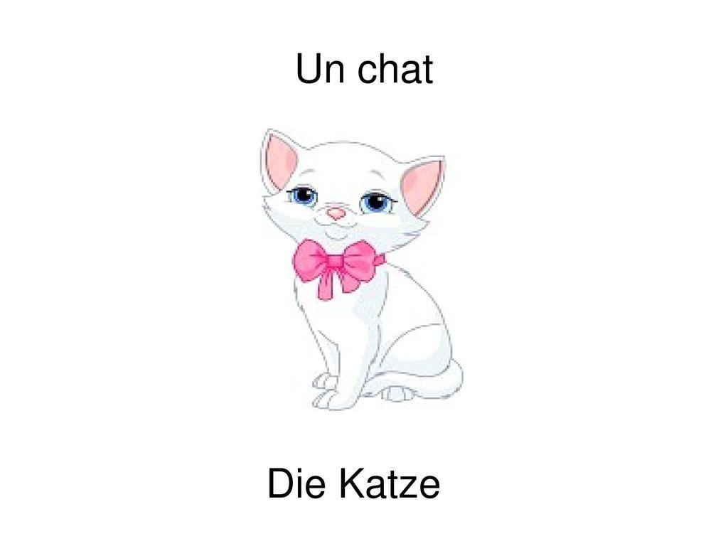 Un chat Die Katze