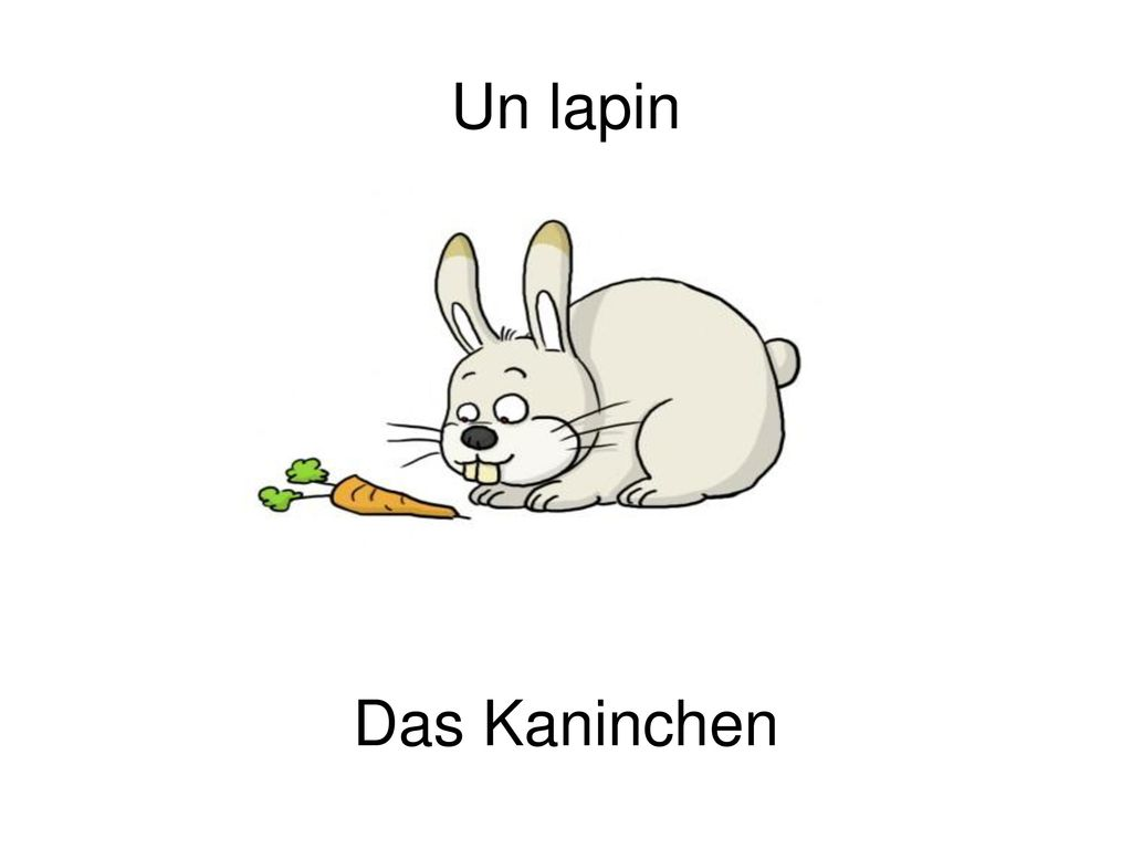 Un lapin Das Kaninchen