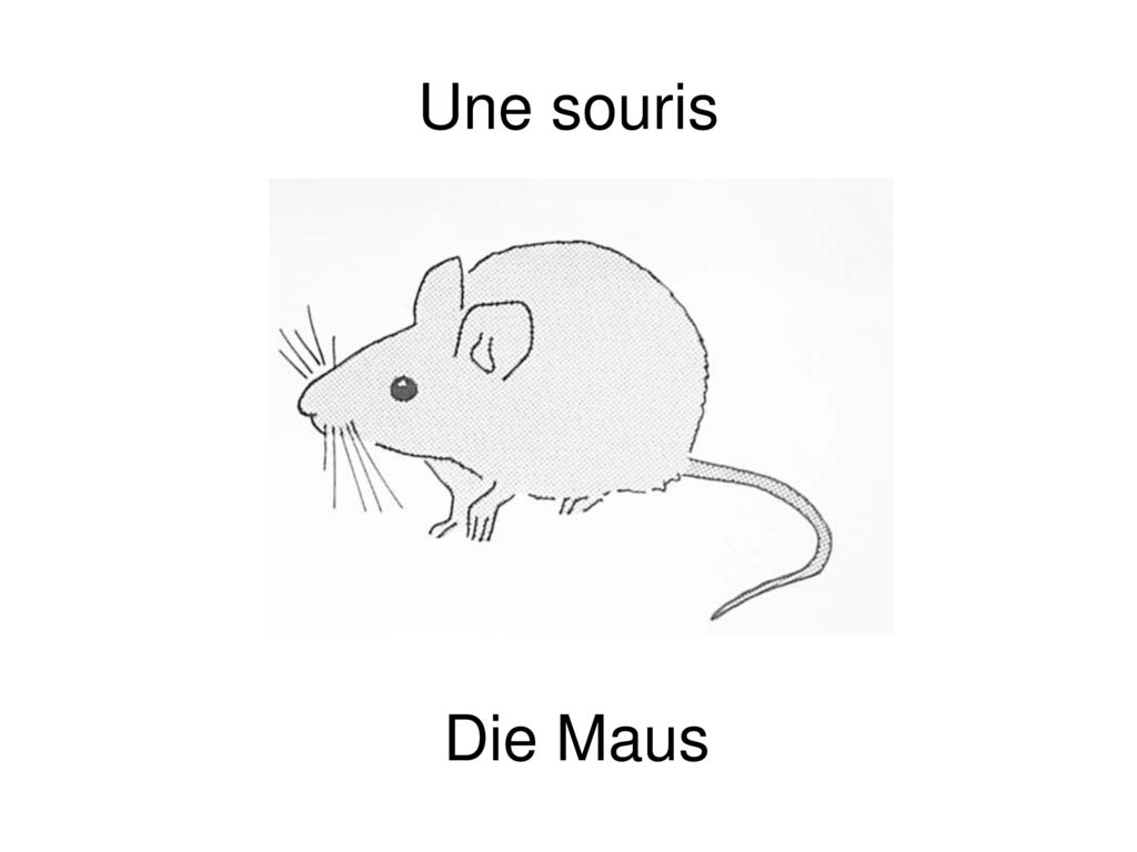 Une souris Die Maus