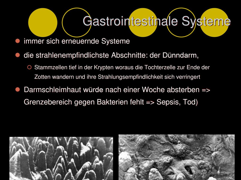 Gastrointestinale Systeme