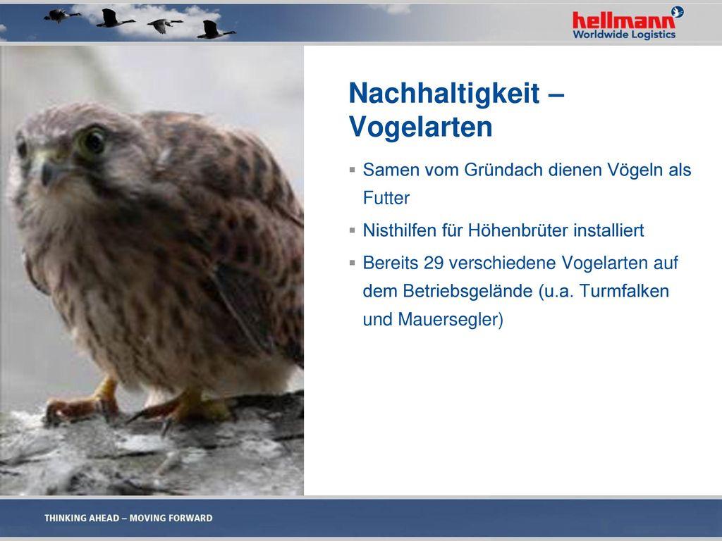 Nachhaltigkeit – Vogelarten