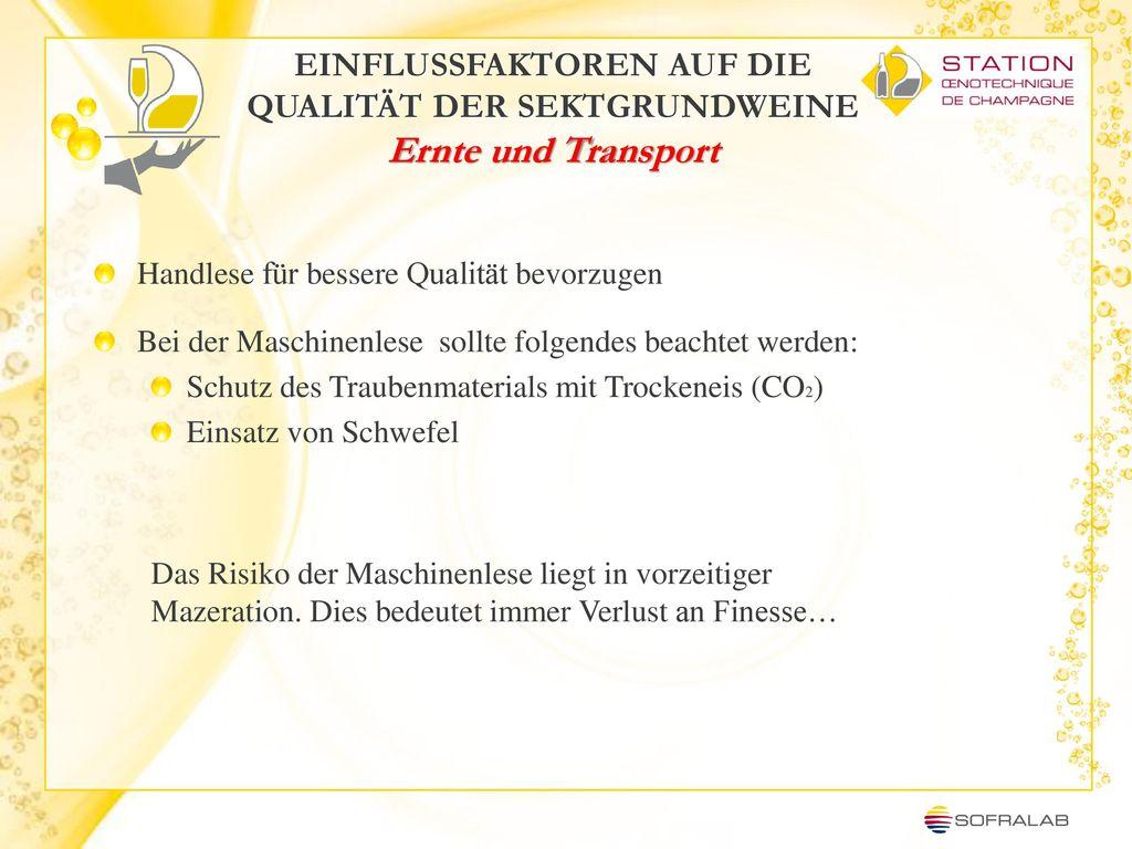 EINFLUSSFAKTOREN AUF DIE QUALITÄT DER SEKTGRUNDWEINE Ernte und Transport