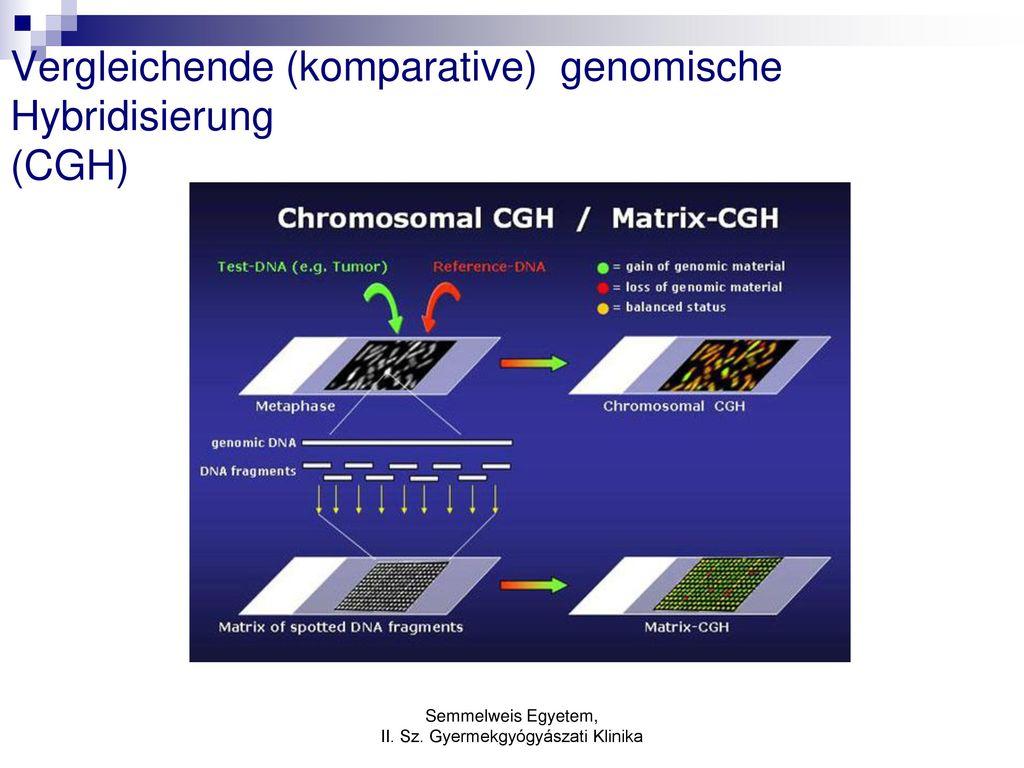 Vergleichende (komparative) genomische Hybridisierung (CGH)