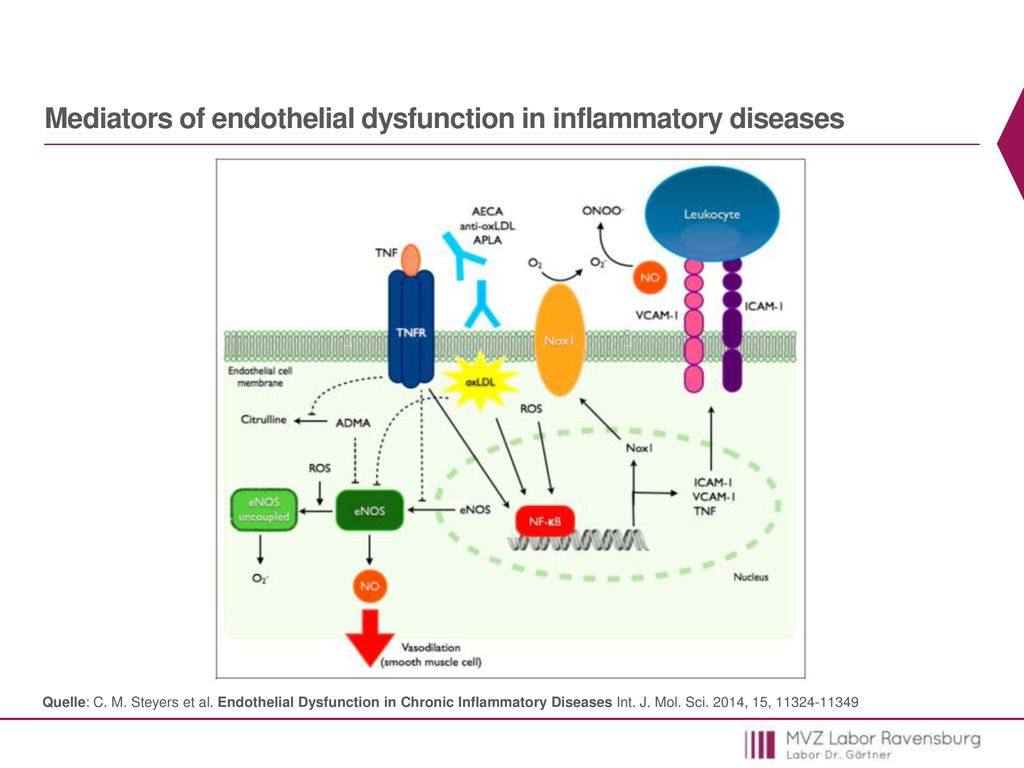 Mediators of endothelial dysfunction in inflammatory diseases