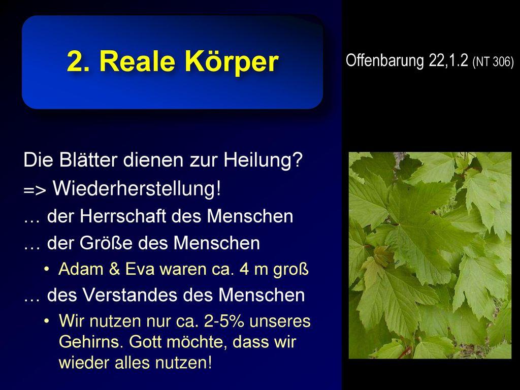 2. Reale Körper Die Blätter dienen zur Heilung