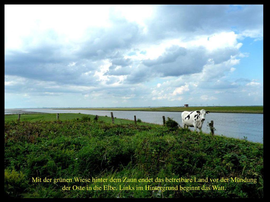 der Oste in die Elbe. Links im Hintergrund beginnt das Watt.