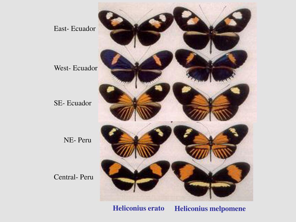 East- Ecuador West- Ecuador. SE- Ecuador. NE- Peru.