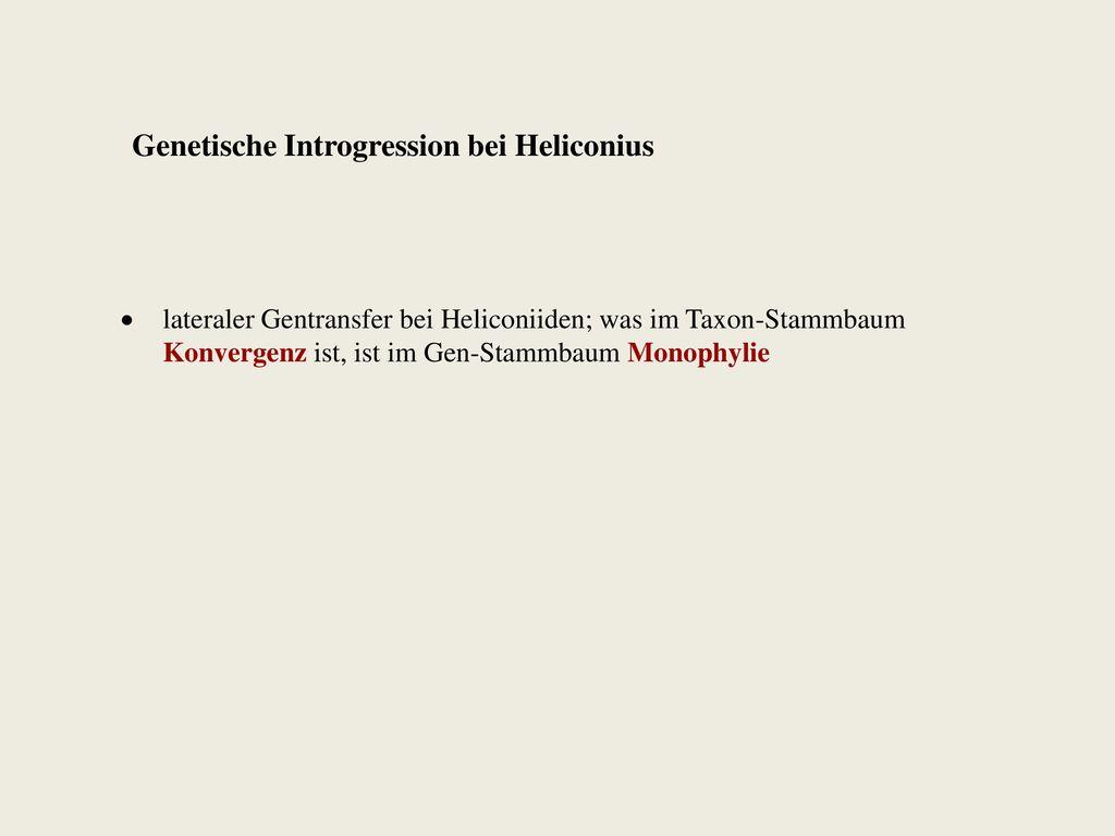 Genetische Introgression bei Heliconius