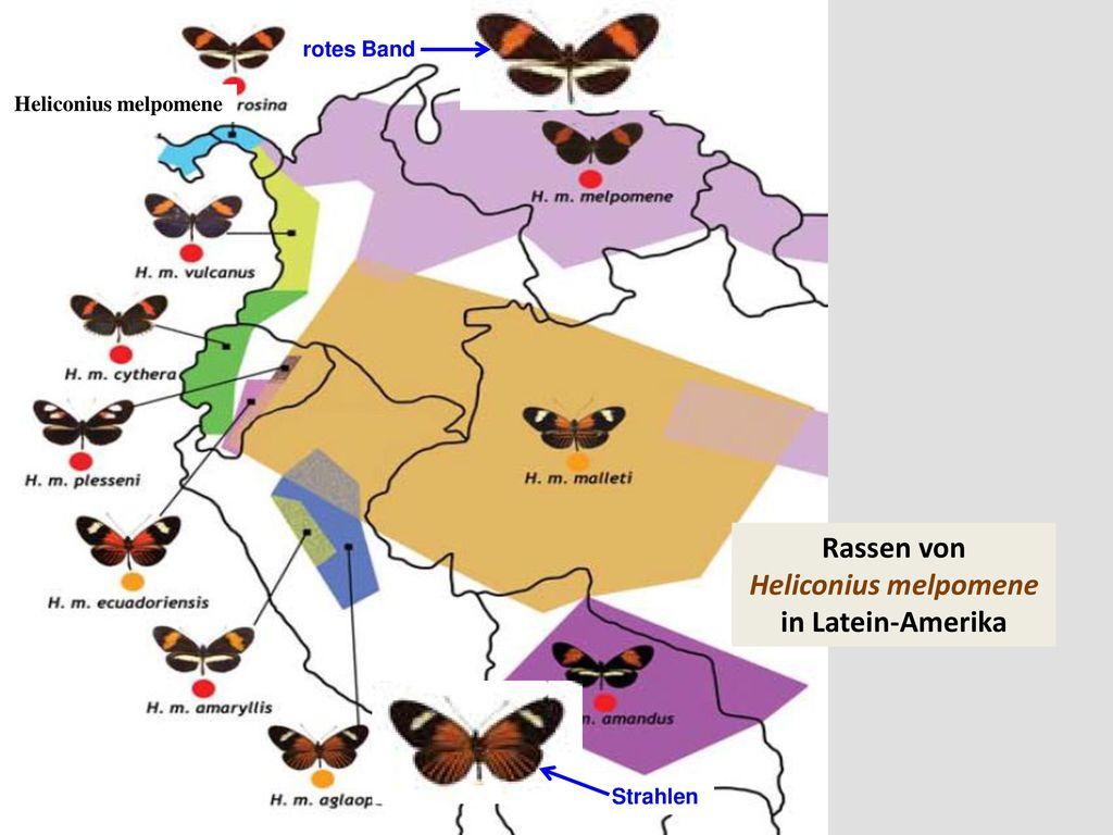 Rassen von Heliconius melpomene in Latein-Amerika