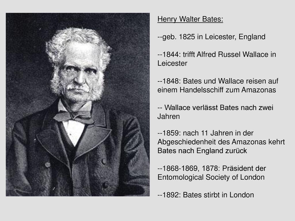 Henry Walter Bates: --geb. 1825 in Leicester, England. --1844: trifft Alfred Russel Wallace in Leicester.
