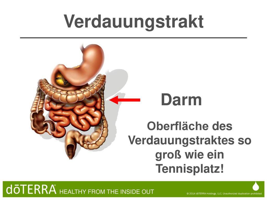 Schön Hirnblutgefäße Anatomie Galerie - Anatomie Ideen - finotti.info