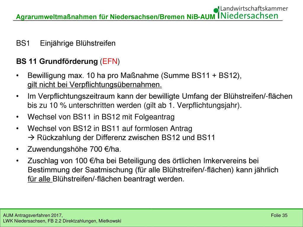 BS1 Einjährige Blühstreifen BS 11 Grundförderung (EFN)