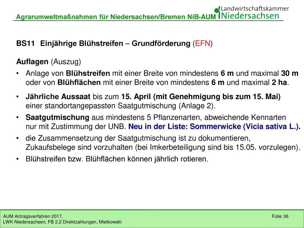 BS11 Einjährige Blühstreifen – Grundförderung (EFN) Auflagen (Auszug)