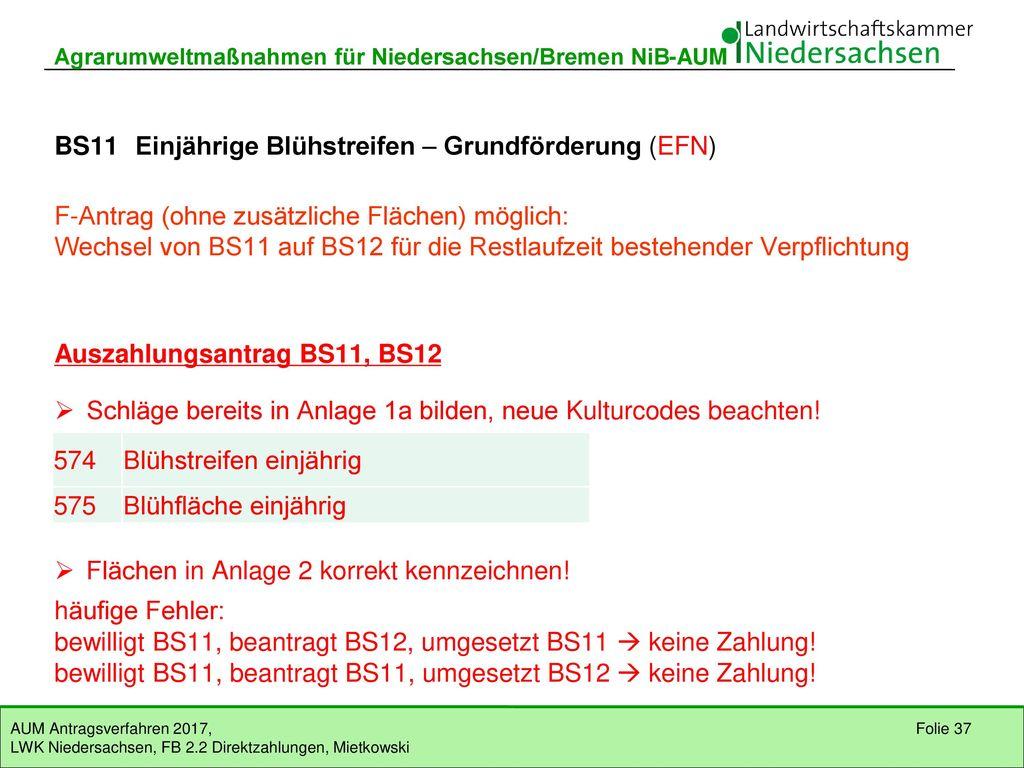BS11 Einjährige Blühstreifen – Grundförderung (EFN)