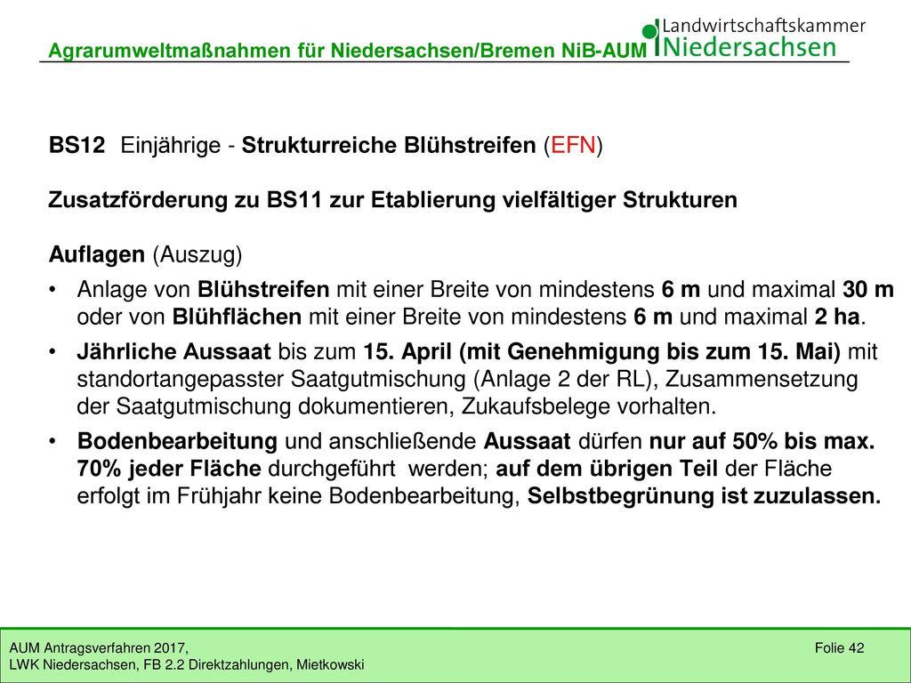 BS12 Einjährige - Strukturreiche Blühstreifen (EFN)