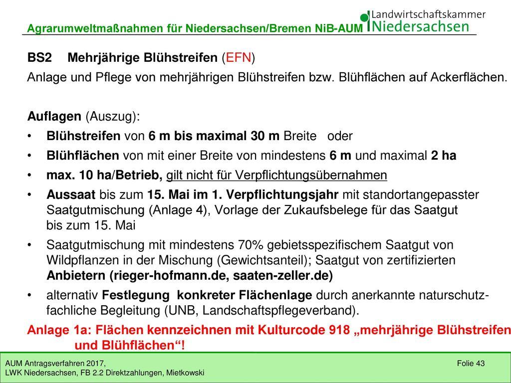 BS2 Mehrjährige Blühstreifen (EFN)