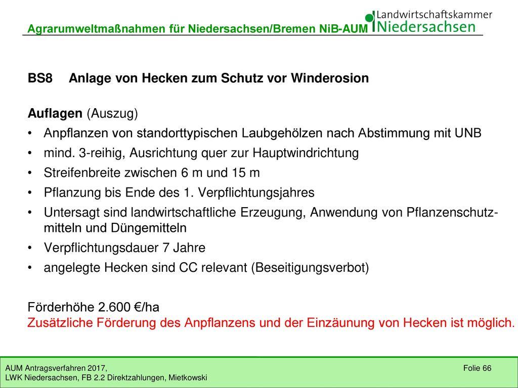 BS8 Anlage von Hecken zum Schutz vor Winderosion (E)