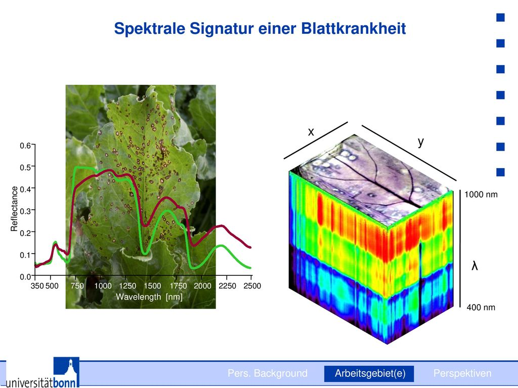 Spektrale Signatur einer Blattkrankheit