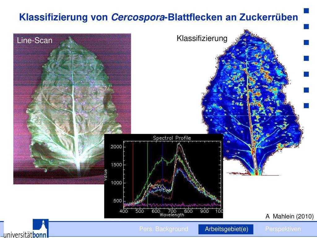 Klassifizierung von Cercospora-Blattflecken an Zuckerrüben
