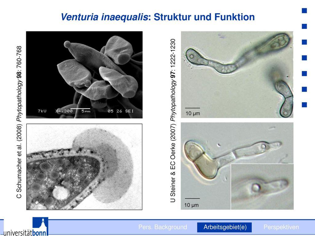 Venturia inaequalis: Struktur und Funktion