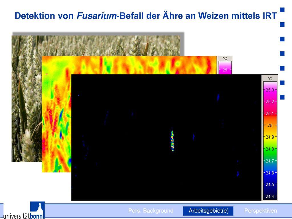 Detektion von Fusarium-Befall der Ähre an Weizen mittels IRT